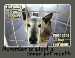 adoptseniordog