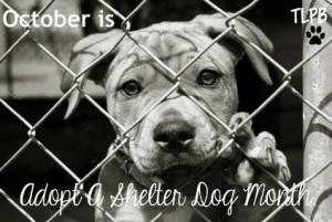 adoptshelterdog