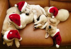 christmas-dog-dogs-merry-christmas-photography-Favim.com-248743