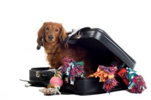 pet-suitcase